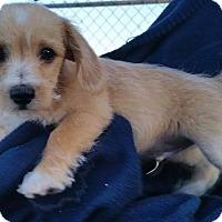 Adopt A Pet :: Hobbs - Temecula, CA