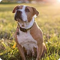 Adopt A Pet :: Tacori - Southampton, PA