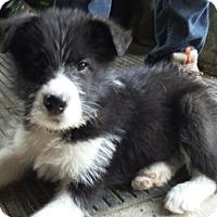 Adopt A Pet :: Mason - Woodstock, ON
