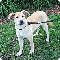 Adopt A Pet :: Jamaica - Joliet, IL