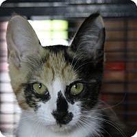 Adopt A Pet :: Hannah Mae - Sarasota, FL
