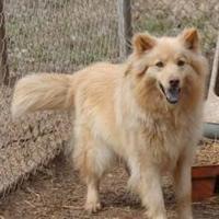 Adopt A Pet :: moe - Wichita, KS