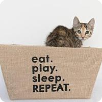 Adopt A Pet :: America - Chico, CA