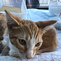 Adopt A Pet :: Lucky - Long Beach, CA