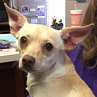 Adopt A Pet :: Peaches - Amarillo, TX