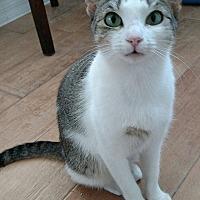Adopt A Pet :: Cilantro - Tampa, FL