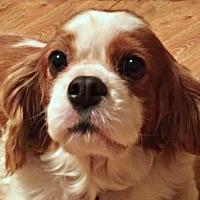 Adopt A Pet :: Peaches - Little Rock, AR