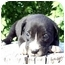 Photo 2 - Great Dane/Boxer Mix Puppy for adoption in Provo, Utah - DIESEL