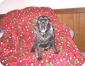 Cocker Spaniel Dog for adoption in Kannapolis, North Carolina - Rose - Adopted!