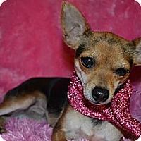 Adopt A Pet :: Beth - Cranford, NJ