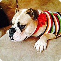 Adopt A Pet :: Amber - Strongsville, OH