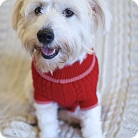 Adopt A Pet :: Fabulous Florence - Madison, NJ