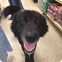 Adopt A Pet :: Klaus - Brick, NJ