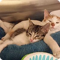 Adopt A Pet :: Cutie - Lawrenceville, GA