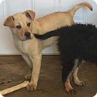 Adopt A Pet :: Carter - Waterbury, CT