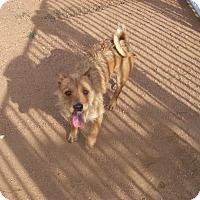 Adopt A Pet :: Faunzy - Buchanan Dam, TX