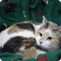 Adopt A Pet :: Peekie - West Des Moines, IA
