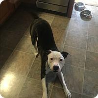 Adopt A Pet :: COURTESY POST - Rascal - Chambersburg, PA