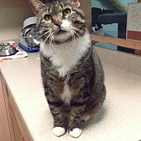 Adopt A Pet :: AnaBelle (Ana) - Leonardtown, MD