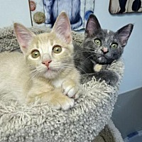 Adopt A Pet :: Finnegan and Toots - Westlake Village, CA