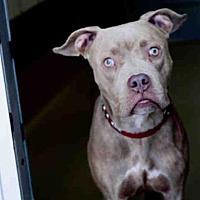Adopt A Pet :: *SWEET PEA - Austin, TX