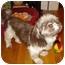 Photo 3 - Shih Tzu Dog for adoption in Long Beach, New York - Brooklyn