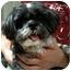 Photo 2 - Shih Tzu Dog for adoption in Los Angeles, California - CALEB