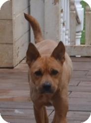 Shepherd (Unknown Type)/Boxer Mix Dog for adoption in Overland Park, Kansas - PEANUT