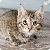 Adopt A Pet :: Annie - Eagan, MN