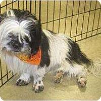 Adopt A Pet :: Jill - Alexandria, VA