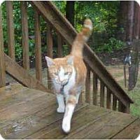 Adopt A Pet :: Jaxson - Chesapeake, VA
