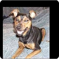 Adopt A Pet :: Hulk - Phoenix, AZ
