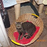 Adopt A Pet :: Pisser - Benton, PA