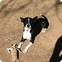 Adopt A Pet :: Mary Jane - Scottsdale, AZ