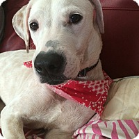 Adopt A Pet :: Kind Kim - Madison, NJ