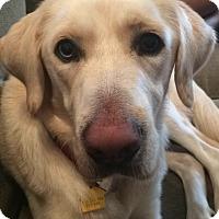 Adopt A Pet :: Chance - Cumming, GA