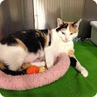 Adopt A Pet :: Xena - Muncie, IN