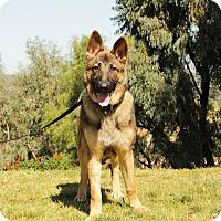 Adopt A Pet :: Fletcher - Laguna Niguel, CA