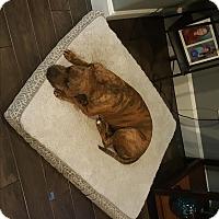 Adopt A Pet :: Abby - courtesy listing - Gig Harbor, WA