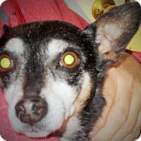 Adopt A Pet :: Rocky - Plain City, OH