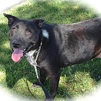 Adopt A Pet :: Juliet - Anaheim, CA