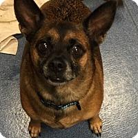 Adopt A Pet :: Milo - Jupiter, FL