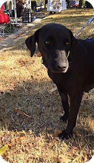 Labrador Retriever Mix Dog for adoption in Cumming, Georgia - Autumn