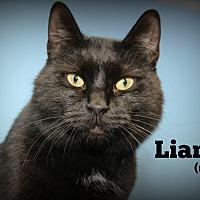 Adopt A Pet :: Liam - Glen Mills, PA