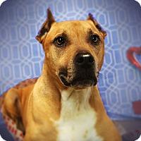 Adopt A Pet :: SAWYER (video) - Los Angeles, CA