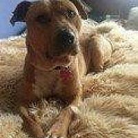 Adopt A Pet :: GUINNESS - Hampton, VA