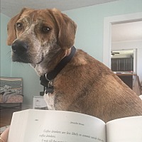 Adopt A Pet :: Maximus - Radford, VA