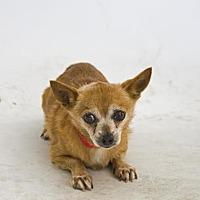 Adopt A Pet :: Homer - Santa Paula, CA