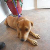 Adopt A Pet :: Debbie - Opelousas, LA