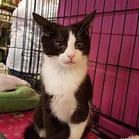 Adopt A Pet :: Pearl - Irwin, PA